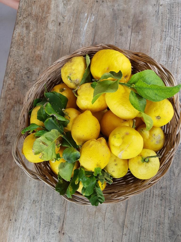 Infotour Ischia - Schale mit Zitronen