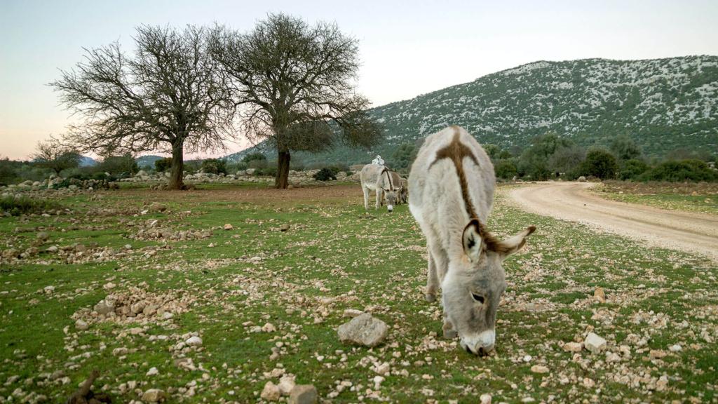 Sardinien mit Kindern - Golgo Hochebene