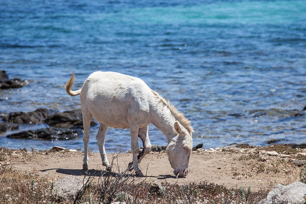 Nationalpark Asinara auf Sardinien